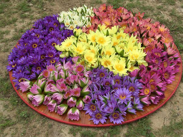 煙供法會做水供,供養蓮花,蓮花有七色